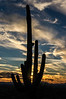 Saguaro starset. Part of the set of pictures I took of our first sunset in Tucson.  And a glorious one it was, too. DP024-2013.  Posted January 24; processed January 23. . Taken from our rental house on Ponce de Leon Drive in the Catalina foothills. Tucson, Arizona December 20, 2012 (5:10 pm MST; I hadn't yet reset the time on my camera)