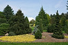 Evergreens - Mixed and in the Landscape : Pictures of scenes or landscapes in which evergreens figure prominently. Also shots of mixtures of evergreens that don't fit readily into any of the more specific galleries of this cyber arboretum.  I've tried to select pictures that celebrate the wonderful variety of evergreens that add charm to our yards, gardens, and parks year-round.
