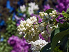 A bower of blooms 