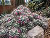 Mammillaria Mound.
