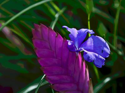Conservatory Plants