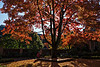 Meditation on autumn glory<br /> <br /> DP313-2013  Posted November 9; processed ditto<br /> <br /> She sat unmoving, eyes closed, but not, surely, oblivious to the spectacularly luminous scene that surrounded her.<br /> <br /> Courtyard, Michigan League<br /> Taken November 8, 2013