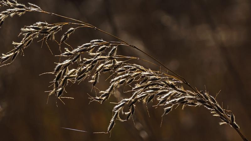 Autumn light on prairie grass