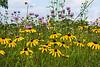 Summer Day - Wild bergamot and rudbeckia