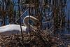 Homemaker - Swan on its Nest