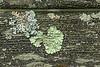 Lichen on weathered park bench