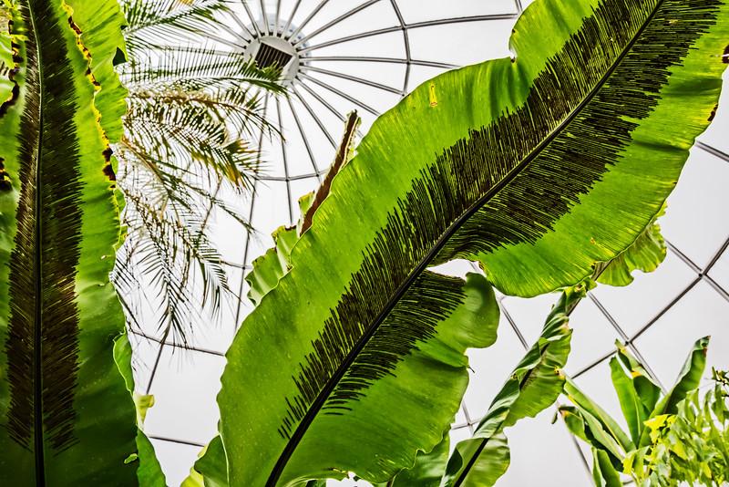 Secret Sex Life of Ferns - Spores on Birds Nest Fern Leaves