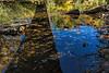 Miniature riverscape.  Foam, reflections, shallow water.