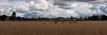 Wetlands panorama, Eugene, Oregon