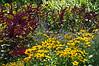 D201-2012 x .<br /> .<br /> Matthaei Botanical Gardens, Ann Arbor, Michigan.<br /> July 20, 2012.<br /> (nex5n)