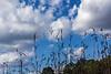 Tall grasses and sky - Dow Prairie, Nichols Arboretum