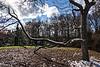 D316-2013  Snow on sassafras limbs<br /> <br /> Juniper Hill, Hidden Lake Gardens, Michigan<br /> November 12, 2013