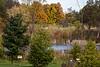 D279-2014  Egret fishing in pond.<br /> <br /> Matthaei Botanical Gardens, Ann Arbor, Michigan<br /> October 6, 2014